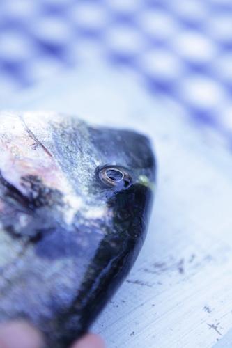 VerticalFish2