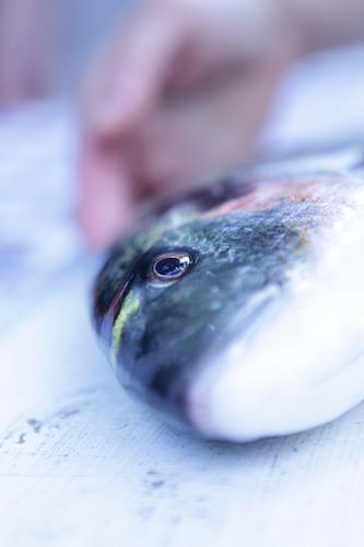 VerticalFish6
