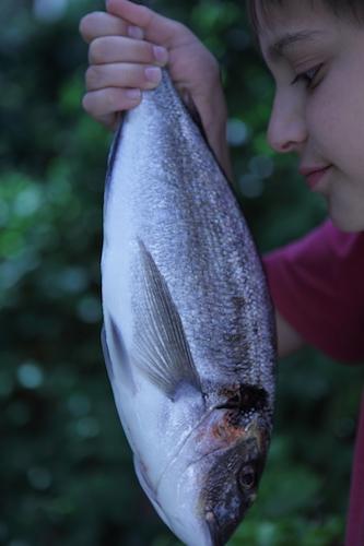 VerticalFish9